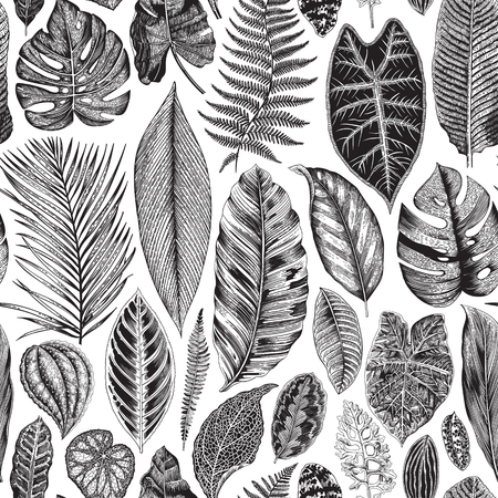 Vector seamless vintage floral pattern. Exotic leaves. Botanical classic illustration. Black and white Çizim