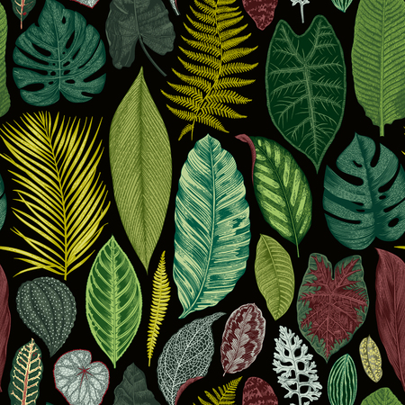 philodendron: Vector seamless vintage floral pattern. Exotic leaves. Botanical classic illustration. Vivid