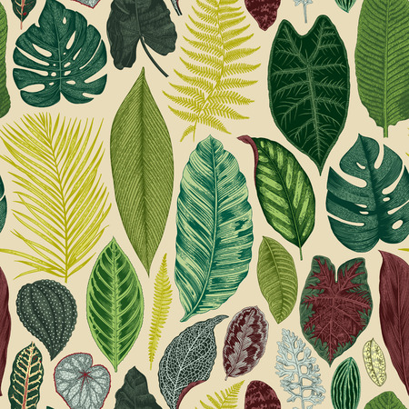 Vector seamless vintage floral pattern. Exotic leaves. Botanical classic illustration. Colorful