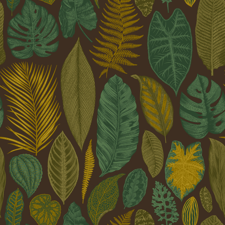 philodendron: Vector seamless vintage floral pattern. Exotic leaves. Botanical classic illustration. Brown