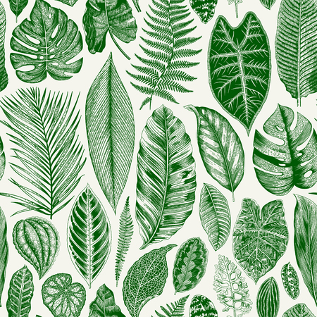 Vector seamless vintage floral pattern. Exotic leaves. Botanical classic illustration. Green