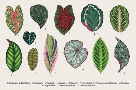 Set leaves. Exotics. Vintage vector botanical illustration. Colorful.