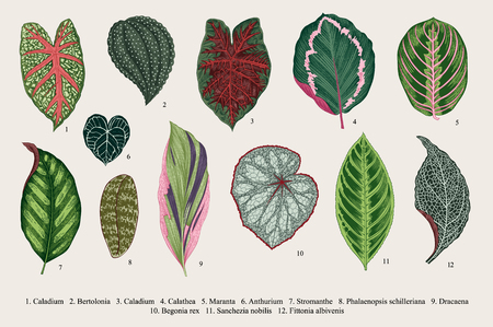 exotics: Set leaves. Exotics. Vintage vector botanical illustration. Colorful.