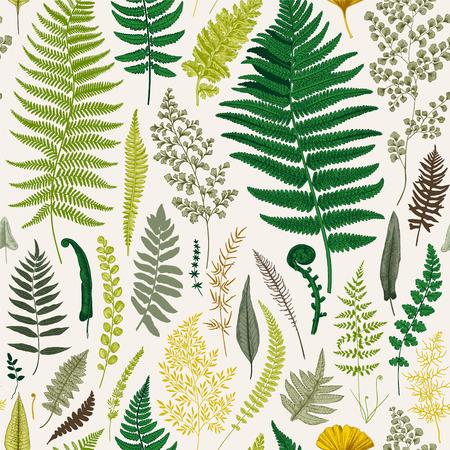 원활한 패턴입니다. 양치류. 빈티지 벡터 식물 그림입니다. 화려한