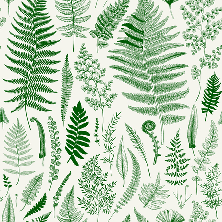 원활한 패턴입니다. 양치류. 빈티지 벡터 식물 그림입니다. 녹색 일러스트