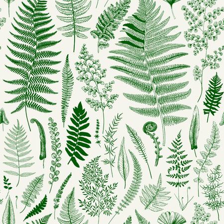 Seamless pattern. Ferns. Vintage vector botanical illustration. Green Vectores