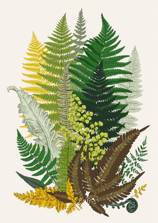 Leaver varens. Samenstelling. Vector botanische vintage illustratie.