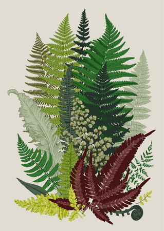 Leaver ferns. Composition. Vector botanical vintage illustration. Colorful