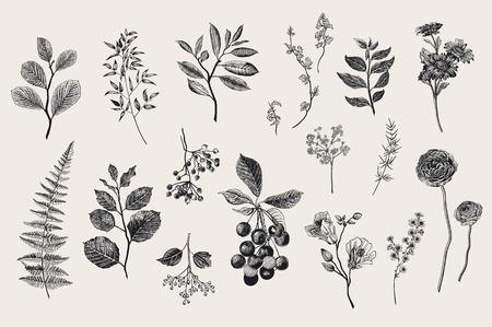 나뭇잎, 꽃 및 열매를 설정합니다. 식물 벡터 빈티지 그림입니다. 플로리스트의 집합입니다. 화려한