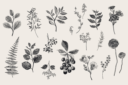 Blätter, Blumen und Beeren gesetzt. Botanische Vektor Jahrgang Illustration. Set von Floristen. Bunt
