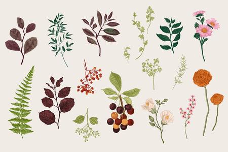 Bladeren, bloemen en bessen instellen. Botanische vector vintage illustratie. Set van bloemist. Kleurrijk