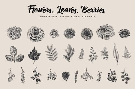 꽃, 나뭇잎, 열매를 설정합니다. 식물 벡터 빈티지 그림입니다. 여름 디자인 요소입니다. 검정색과 흰색