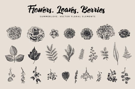 Flowers, leaves, berries set. Botanical vector vintage illustration. Summer Design elements. Black and white Illustration