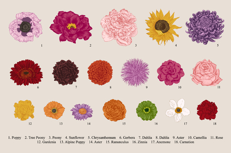 Flowers set. Botanical vector vintage illustration. Design elements. Colorful. Stok Fotoğraf - 86224409