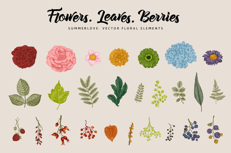 Flowers, leaves, berries set. Botanical vector vintage illustration. Summer Design elements. Colorful.