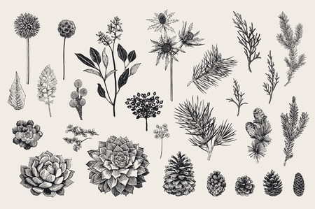 Vintage ilustracji wektorowych botanicznych.