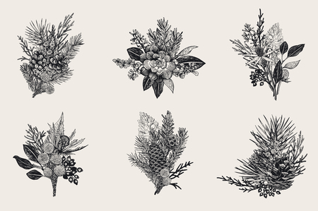 Winter set. Floral Christmas bouquets. Evergreen, cone, succulents, flowers, leaves, berries. Botanical vector vintage illustration. Black and white. Ilustração