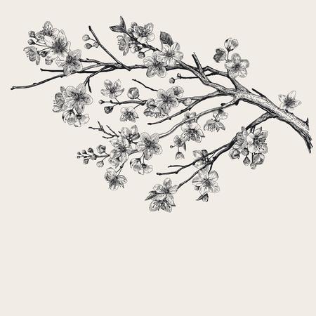 Sakura. Cherry blossom branch. Vector botanical illustration. Black and white