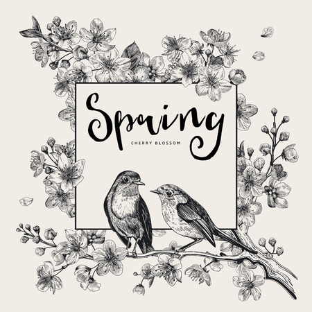 Spring. Pink cherry blossom branch witch birds. Vector botanical illustration. Black and white