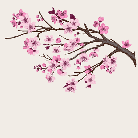 Sakura. Pink cherry blossom branch. Vector botanical illustration.  Vettoriali