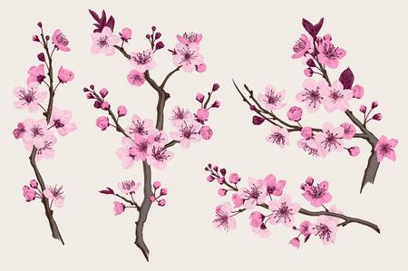 Sakura. Rama rosada de la flor de cerezo. Vector ilustración botánica. Conjunto