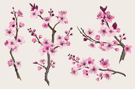 Sakura. Pink cherry blossom branch. Vector botanical illustration. Set