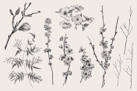 Florece Gargen. Flores de primavera y ramita. Magnolia, spirea, flor de cerezo, cornejo, jazmín, membrillo, ramita de abedul. Ilustración botánica de vector vintage. En blanco y negro Ilustración de vector