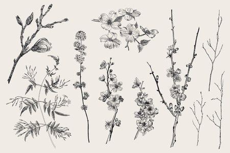 Blooming gargen. Spring Flowers and twig. Magnolia, spirea, cherry blossom, dogwood, jasmine, quince, birch twig. Vintage vector botanical illustration. Black and white Vettoriali