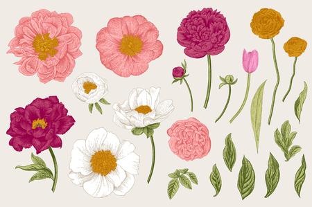 Set of Spring flowers. Vintage vector botanical illustration