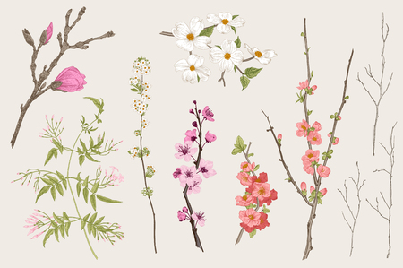 Kwitnący gargen. Wiosenne kwiaty i gałązka. Magnolia, spirea, kwiat wiśni, dereń, jaśmin, pigwa, gałązka brzozy. Vintage wektor ilustracja botaniczna