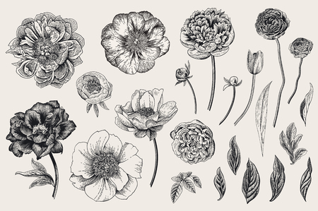 Set of Spring flowers. Vintage vector botanical illustration. Black and white Illustration