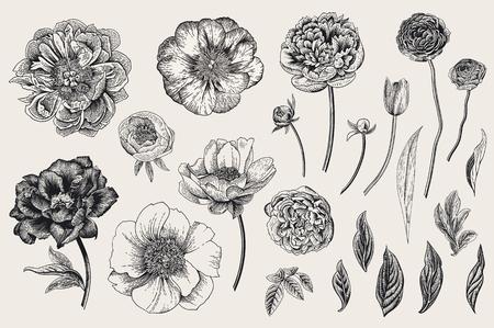 Set of Spring flowers. Vintage vector botanical illustration. Black and white Illustration