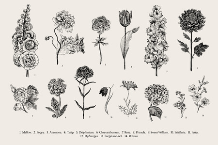 Big set flowers. Victorian garden flowers. Classical botanical vintage illustration. Black and white Ilustração