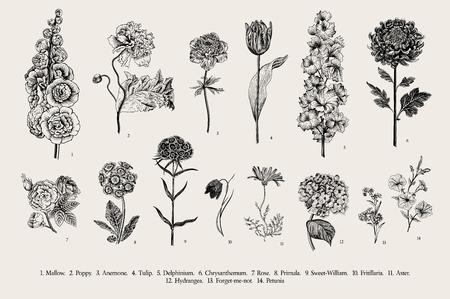 Grandi fiori incastonati. Fiori da giardino vittoriani. Illustrazione d'epoca botanica classica. Bianco e nero