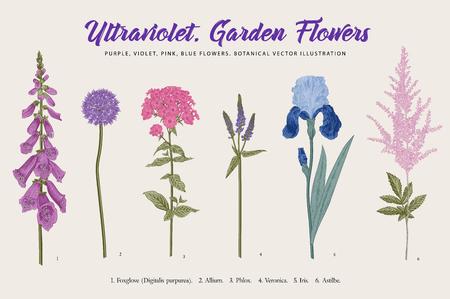 Set garden flowers. Classical botanical illustration. Blue, violet, pink, purple flowers.
