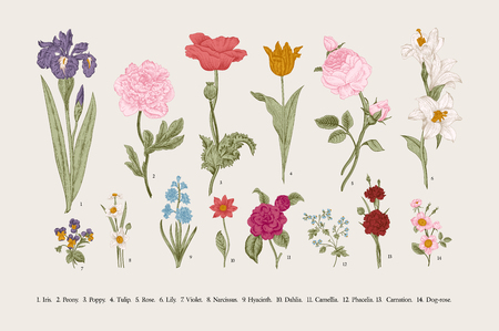 Classical botanical illustration. Victorian garden flowers. Vector vintage set. Фото со стока - 106295151