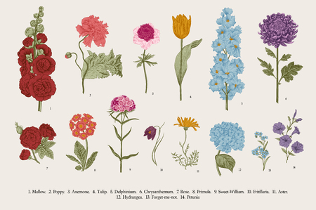 Big set flowers. Victorian garden flowers. Classical botanical vintage illustration. Çizim