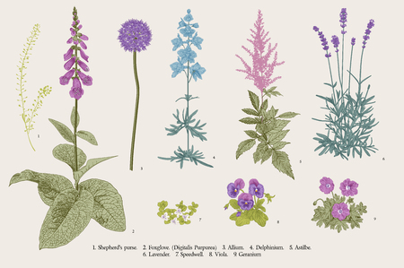 Stel tuin bloemen. Klassieke botanische illustratie. Blauwe, violette, roze, paarse bloemen Vector Illustratie