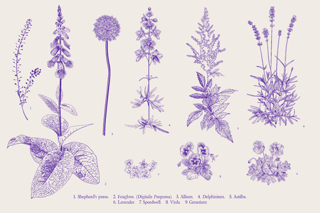 Set garden flowers. Classical botanical illustration. Ultraviolet
