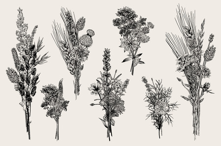 Set bouquets. Design elements. Flowers and plants of fields and forests. Vector vintage botanical illustration. Black and white
