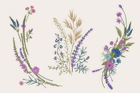 Summer floral composition. Design elements. Flowers and plants of fields and forests. Vector vintage botanical illustration.