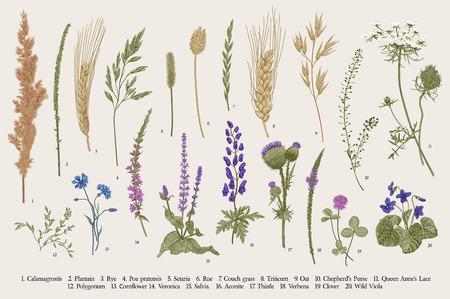 Summertime. Plants of fields and forests. Flowers, cereals. Vector vintage botanical illustration. Illustration