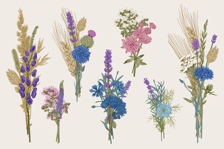 Set bouquets. Design elements. Flowers and plants of fields and forests. Vector vintage botanical illustration