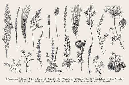 Summertime. Plants of fields and forests. Flowers, cereals. Vector vintage botanical illustration. Black and white Illustration