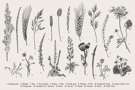 Summertime. Plants of fields and forests. Flowers, cereals. Vector vintage botanical illustration. Black and white Çizim