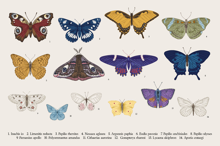 Ustaw motyle. Vintage klasyczna ilustracja wektorowa. Kolorowy Ilustracje wektorowe
