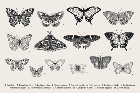 Set butterflies. Vector vintage classic illustration. Black and white Иллюстрация