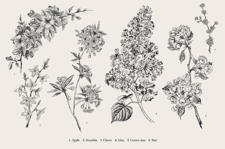 Blooming trees. Vintage vector botanical illustration. Spring set. Black and white