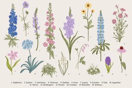 Flores de jardín. Colocar. Ilustración botánica de vector vintage.
