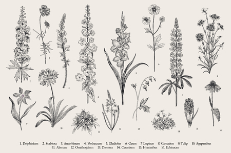 Garden flowers. Set. Vintage vector botanical illustration. Black and white Ilustração
